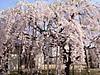 Sakura2012042104
